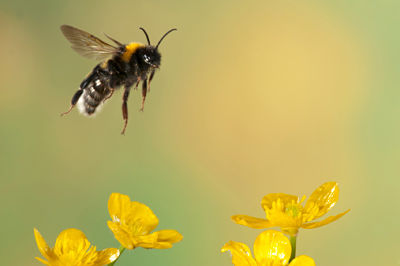 bumble bee flying story