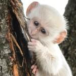 Monkey Story